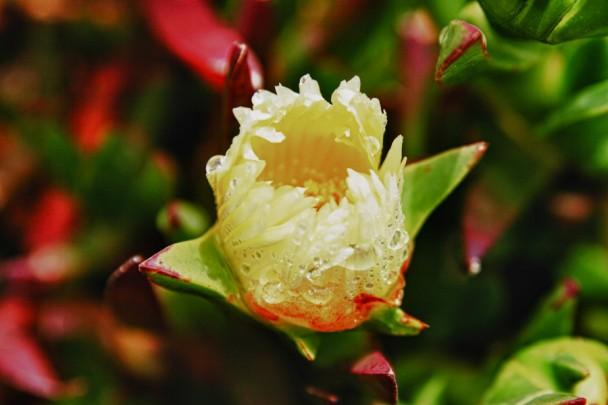 Flor silvestre depois da chuva em Rock Point