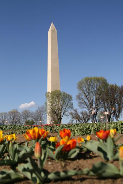 cores e tulipas exóticas