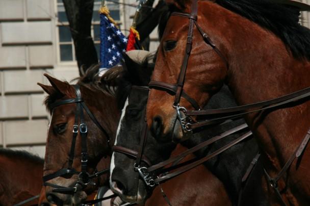 Cavalos da Policia Militar
