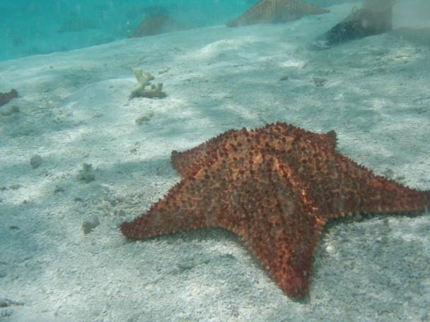quantidade de estrelas do mar em banco de areia