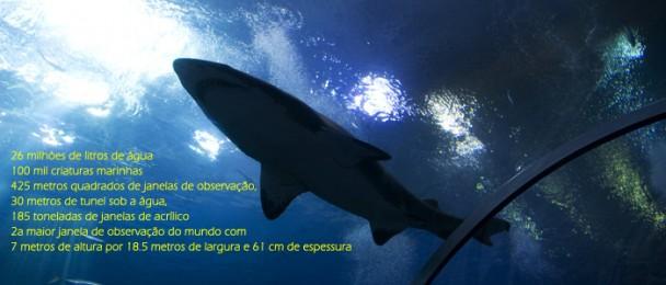 Georgia_Aquarium_Ocean_Voyager_facts1