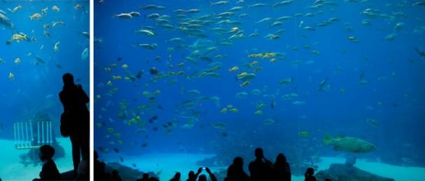 Georgia_Aquarium_Ocean_anfiteatro2