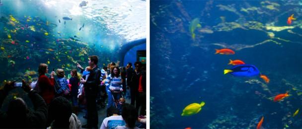 Georgia_Aquarium_Ocean_barreiradecorais