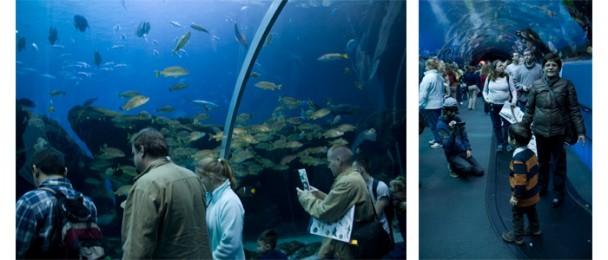 Georgia_Aquarium_Ocean_tunel