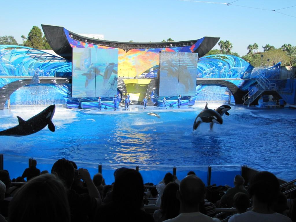 Novo Show da Shamu no Sea World Orlando
