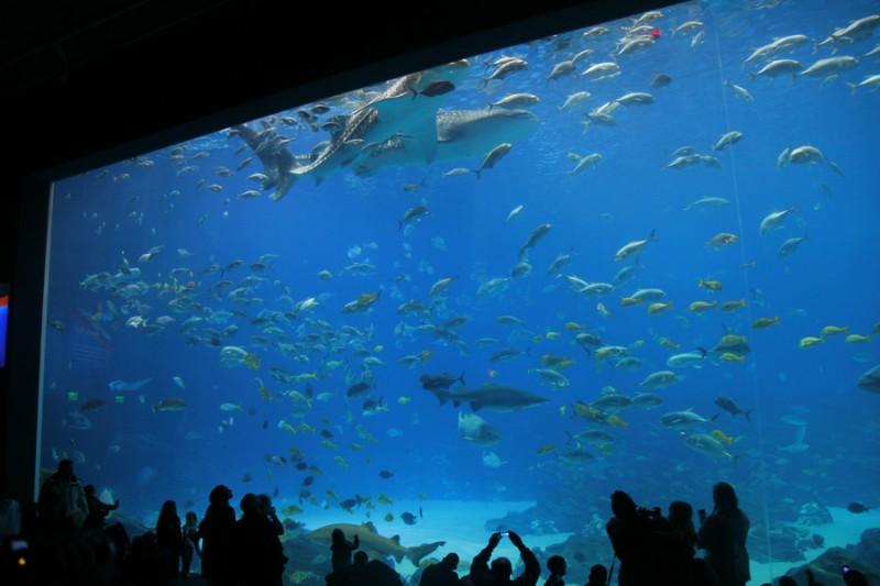 Georgia_Aquarium_Ocean_anfiteatro1-800x533
