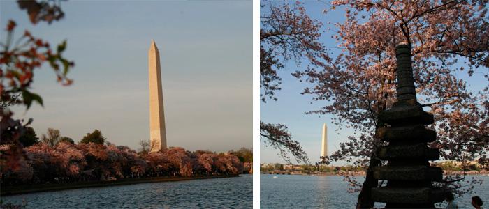 Washington Monument durante o Cherry Blossoms