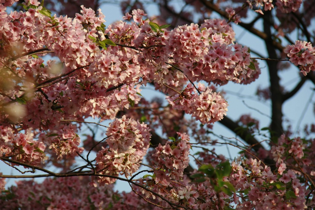 As flores bem rosinhas