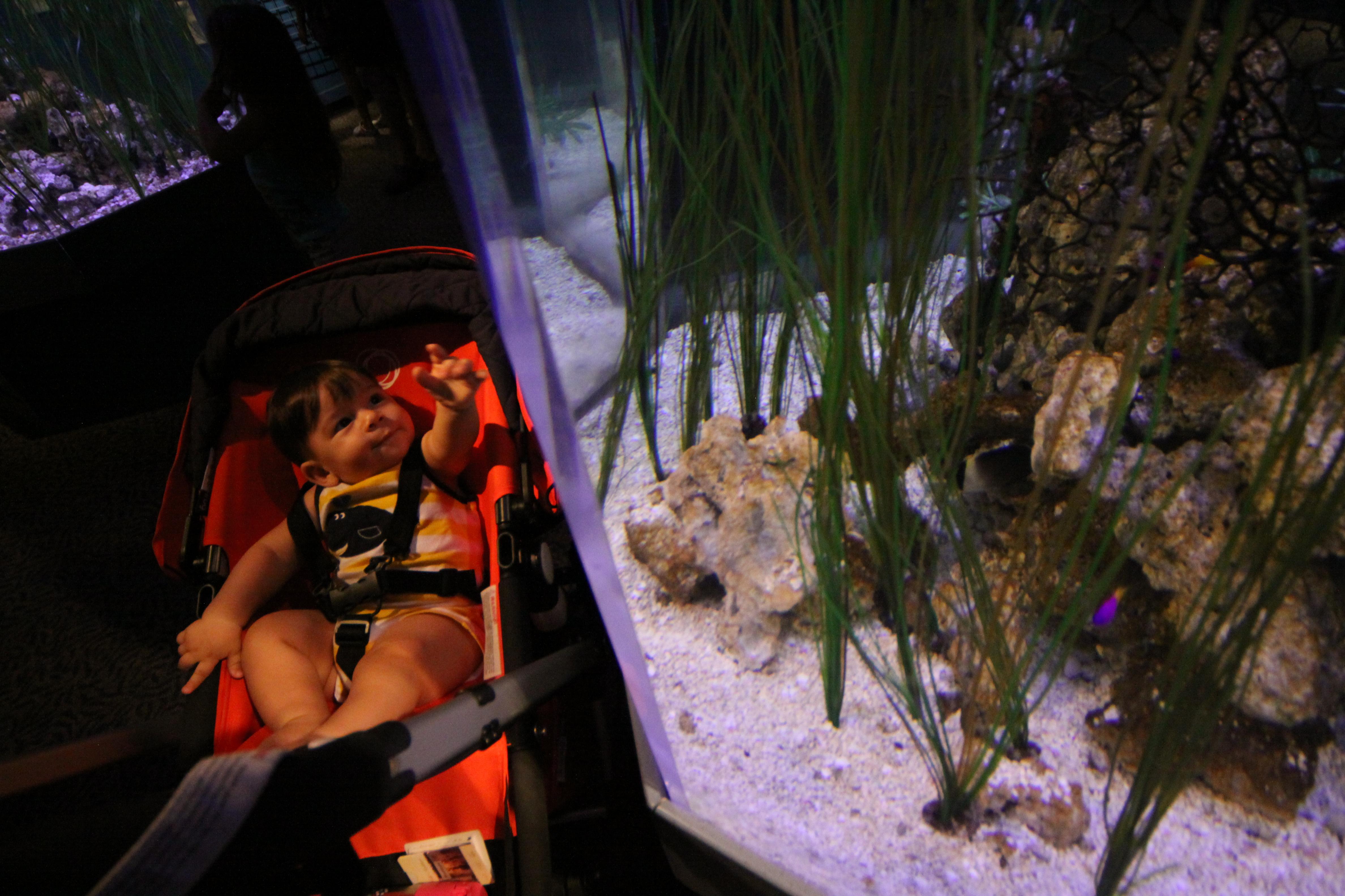 Vendo os aquários de cavalos marinhos