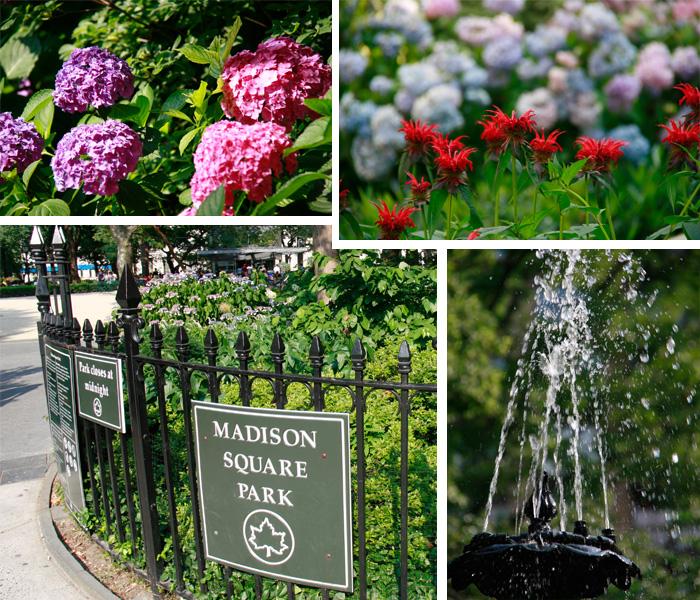 Entrada e Flores no Parque