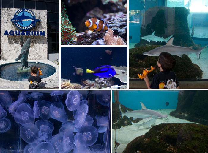 Mote Aquarium