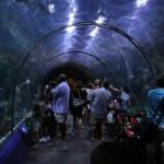 Nova Orleans para crianças: O Aquarium of the Americas