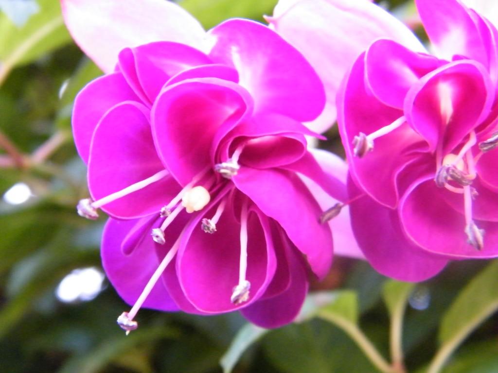 flores madeira