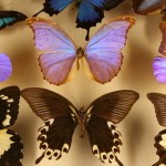 Nova Orleans para crianças: o Audubon Insectarium