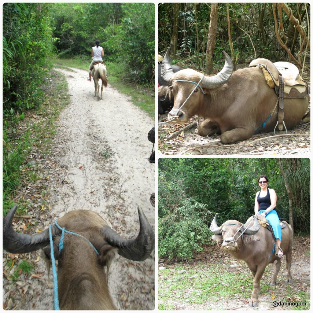 Fazenda Sao Jeronimo - montaria nos bufalos