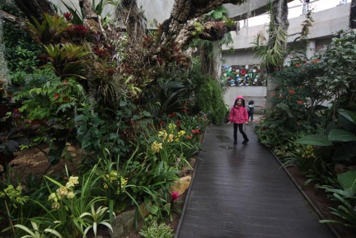 Julia na estufa de plantas tropicais do Jardim Botânico de San Antonio