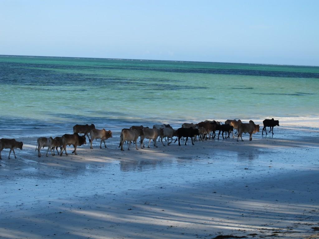 Praia Zanzibar