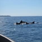 Mergulhando com Golfinhos em Zanzibar – Tanzânia
