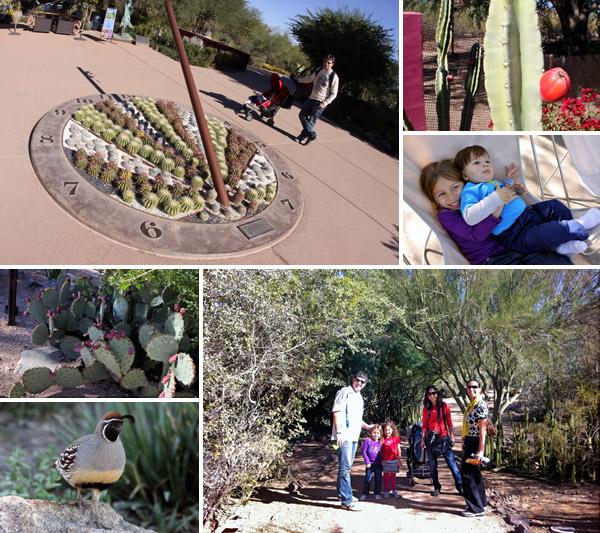 amigos no desert botanical gardens