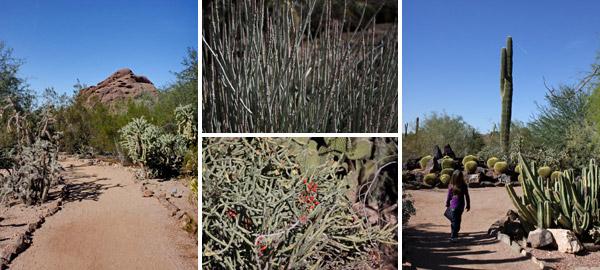 desertbotanicalgardens