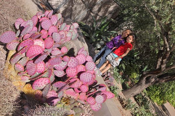 julia victoria desert botanical gardens