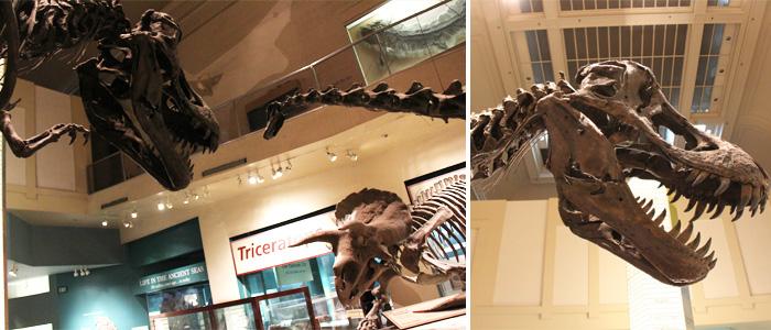 NHM_dinossauros