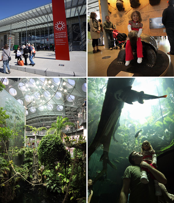 Adoramos a California Academy of Science, principalmente essa área tropical