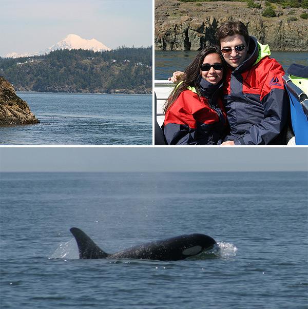 Passeio de barco para ver as baleias Orca em Puget Sound