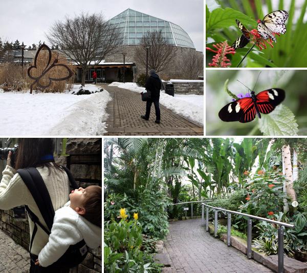 O Conservatório de Borboletas no Jardim Botânico de Niagara Falls