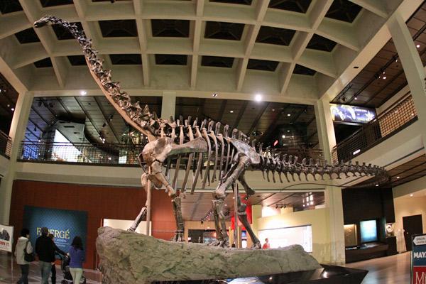 Braquiossauro no Houston Museum of Natural Science