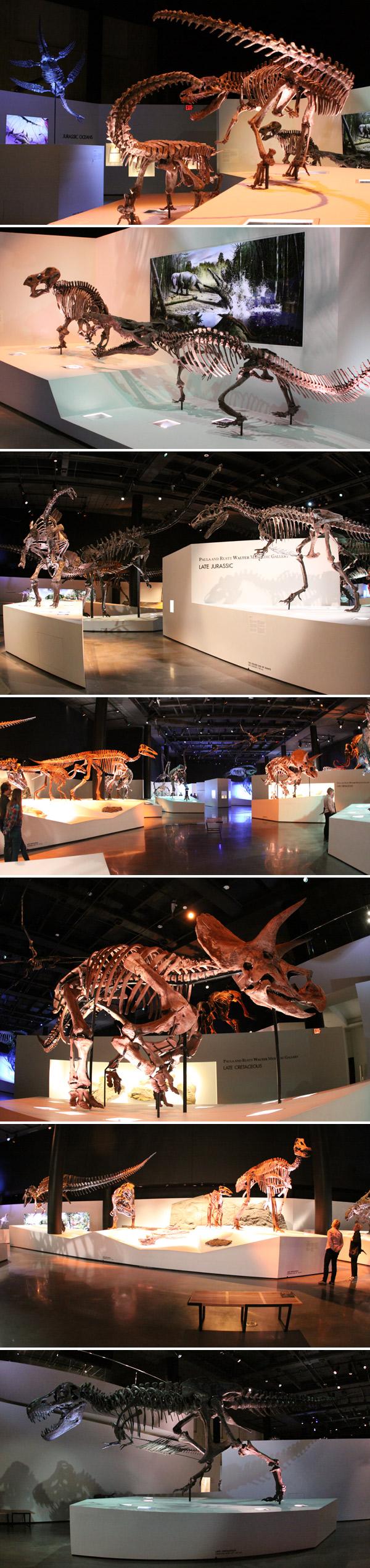 Fósseis de dinossauros do final do período Jurássico no Houston Museum of Natural Science