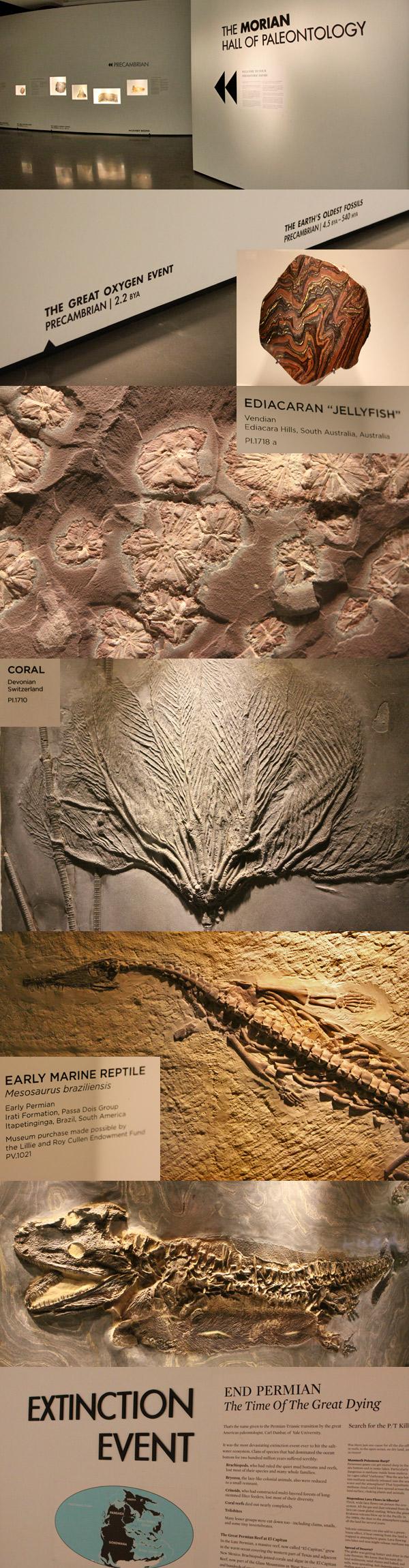 Fósseis do Hall de Paleontologia do Houston Museum of Natural Science