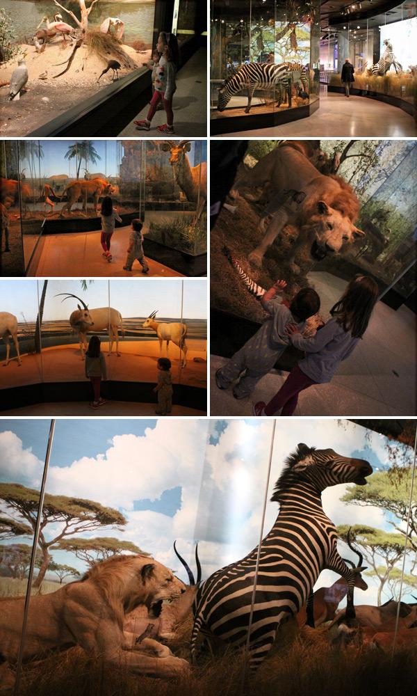 Julia e Eric gostaram de ver os bichos da África e do Texas no Houston Museum of Natural Science
