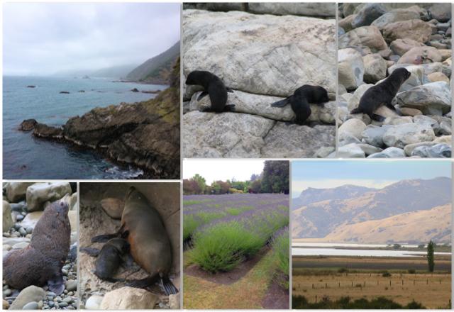 Quarto dia da viagem: Explorando Kaikoura Coast