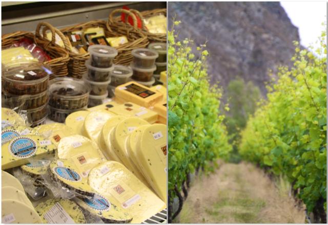 Décimo quinto dia: Explorando vinícolas em Central Otago