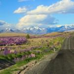 Viajando de carro pela ilha sul da Nova Zelândia