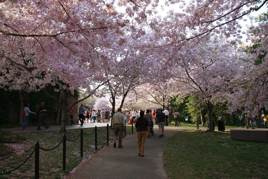 Cerejeiras DC