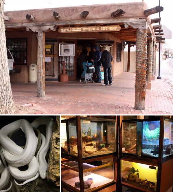 O Rattlesnake Museum em Albuquerque está mais pra loja que museu