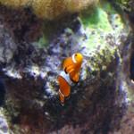 Chicago: visitando o Shedd Aquarium