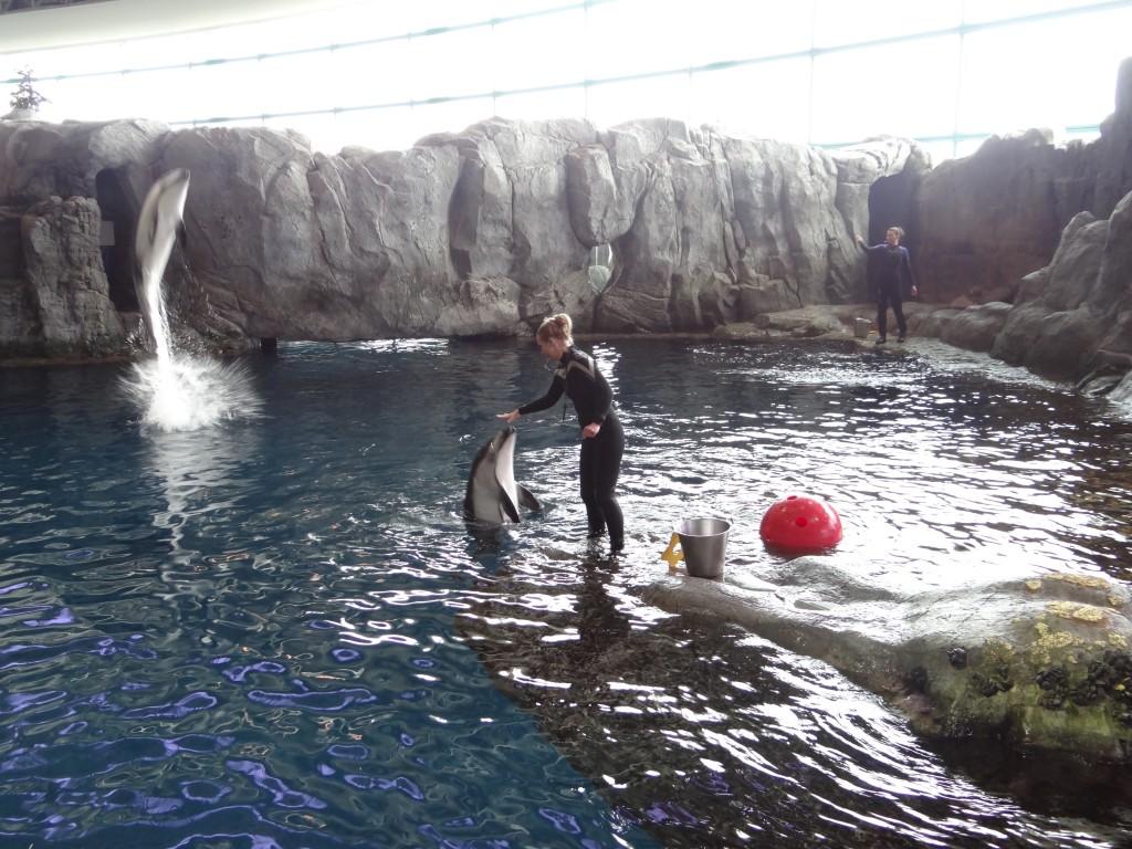 shedd aquarium chicago