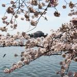 primaveramain