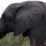 Direto da África: Dias 3, 4 e 5 – Safari e Panorama Route