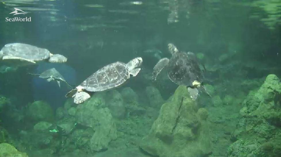 As tartarugas em Turtle Trek em San Diego