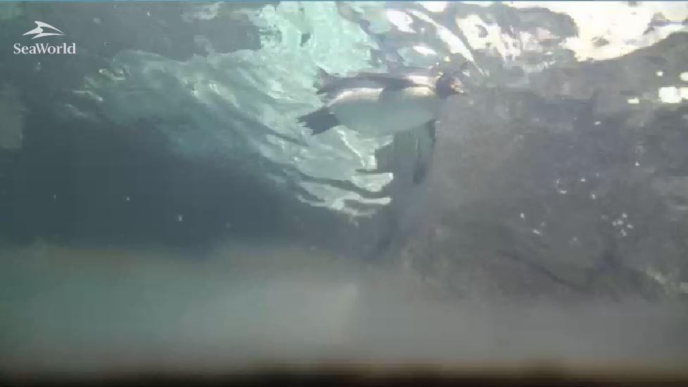 A camera embaixo dágua em Antarctica - Orlando