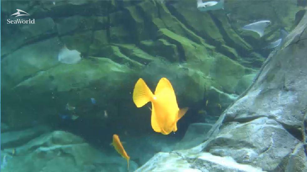 Os peixinhos no tanque das arraias em St Antonio