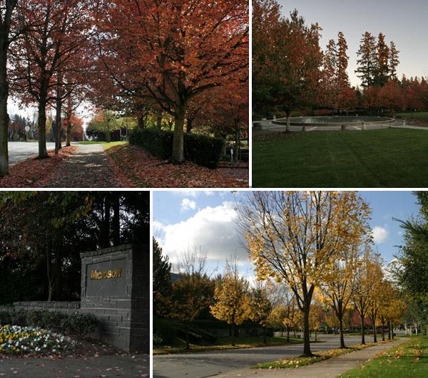O campus da Microsoft fica lindo no outono
