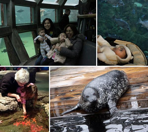 Nós no Seattle Aquarium, as crianças amaram