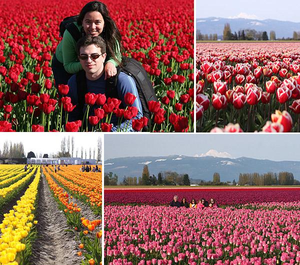 O festival de tulipas de Skagit Valley é imperdível