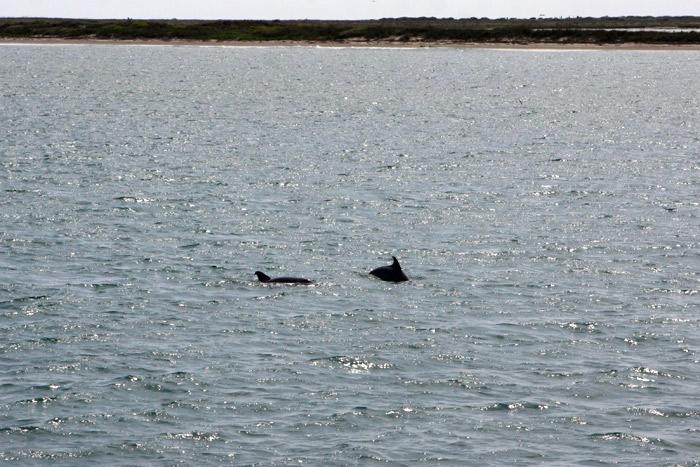 Golfinhos!
