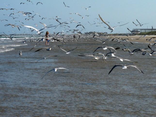 Mais gaivotas do outro lado da praia